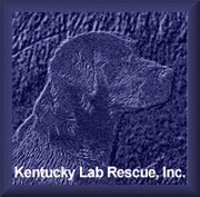 Kentucky Lab Rescue, Inc.