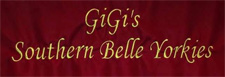 GiGi's Southern Belle Yorkies with Ruth Conner